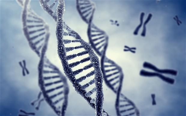 CR4Y8Y-chromosome_2620672b