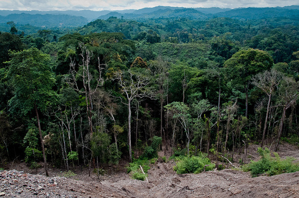 the characteristics of the tropical rain forests in the congo basin Plants of the congo river basin forests home » what we do » priority places » congo basin » area plant diversity and endemism in sub-saharan tropical.