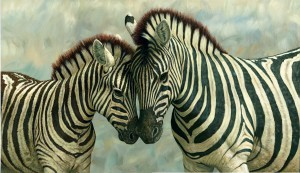 'Why zebras have black and white stripes', Scientists say because of blood-sucking flies