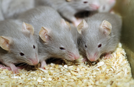 071022-vibrating-mice_big