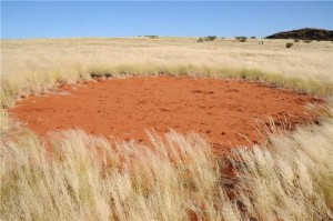'Fairy Circles' in Namibia Weren't Created by Termites