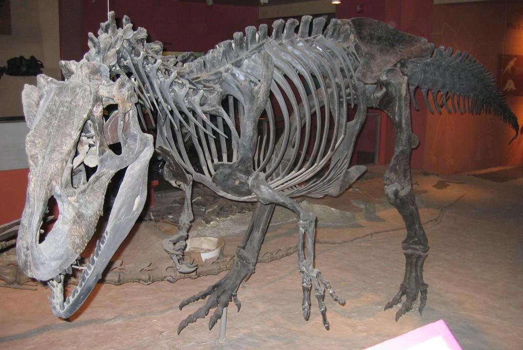 Allosaurus_fragilis_USNM4734
