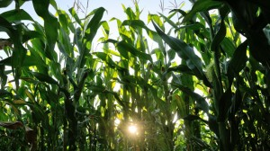 Climate Change Making Food Less Nutritious