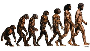 Human Muscles, Brain traded off their energy use – Evolution study