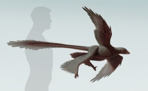 The Largest Flying Dinosaur Unearthed in China