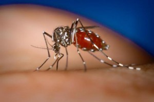 Japan Confirms Dengue Fever Infections, the First Ones in 70 Years