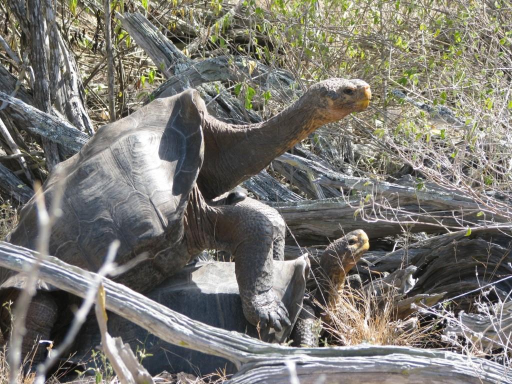 Galapagos Tortoise Population