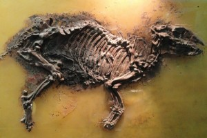 Ancestor of Rhino and Horse Found in India
