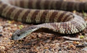DNA Test Identifies Venomous Snake Bites