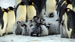 fake penguin chick