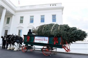White House Christmas Tree Arrives as Holidays Approach