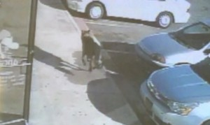 Family Dog Saved His Owners After Road Rage Attack