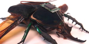 Cyborg Cockroaches May Become the New Rubble Rescuers