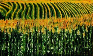 Carbon Dioxide Swings Caused by Crops Productivity Boost