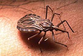 Is Chagas Disease Becoming the New U.S. Public Health Threat?