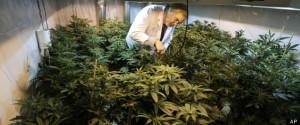New Medical Marijuana Dispensaries Being Approved in Boston
