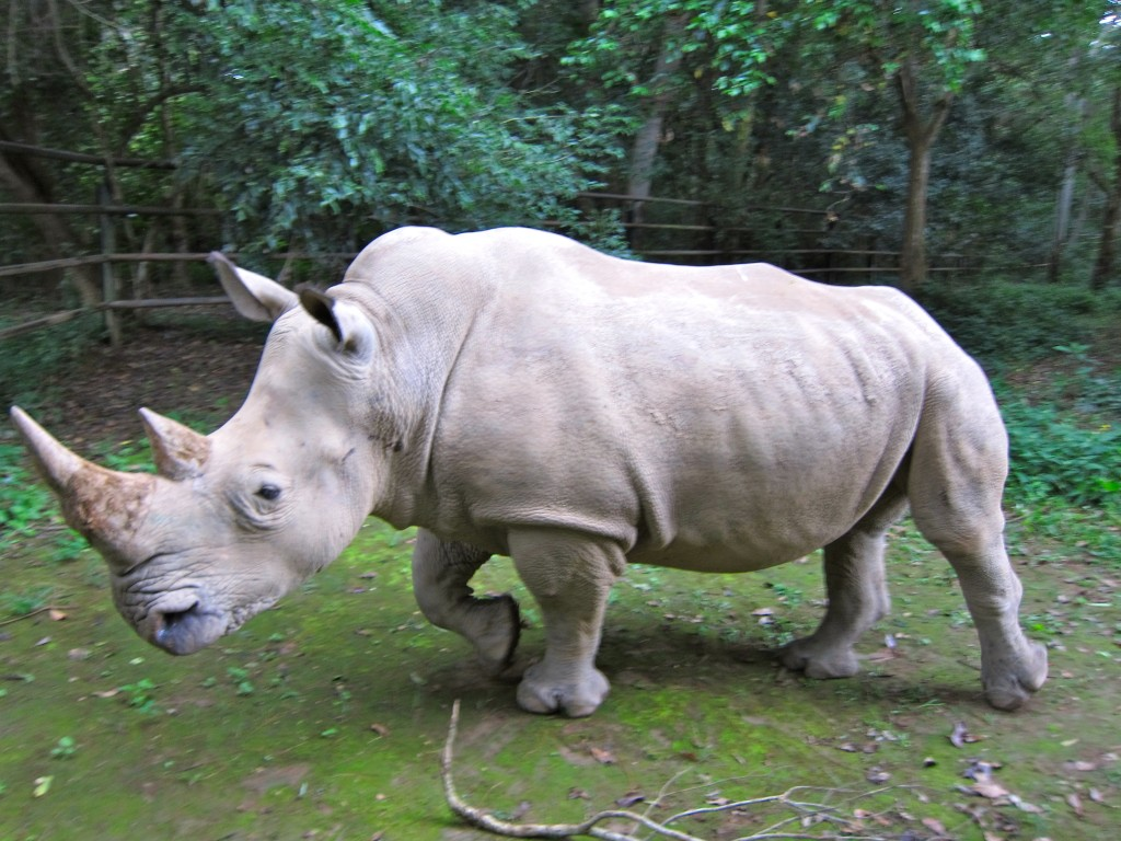 Northern White Rhino Population decreased to five