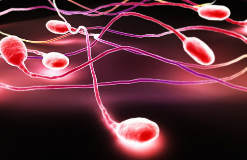 The Quality of Semen a Marker of Other Health Conditions Found in Men