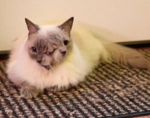 Frank and Louie, the 15-Year Old Two-Faced Cat, Passes Away