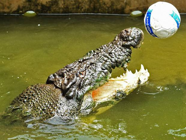 crocodiles can be playful too