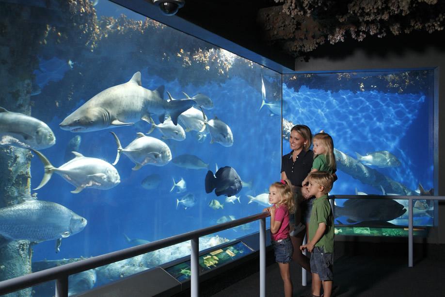 Almost 400 Fish Died At The Texas State Aquarium Lawsuit