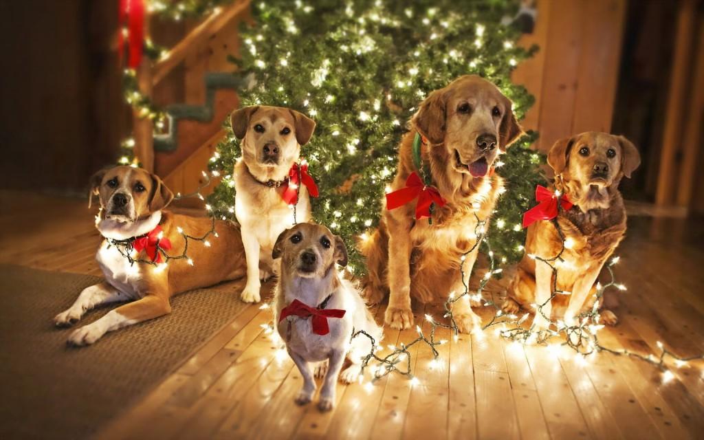 "alt=""Dogs and Christmas Tree"""