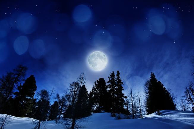 "alt=""Full Moon over Christmas trees"""
