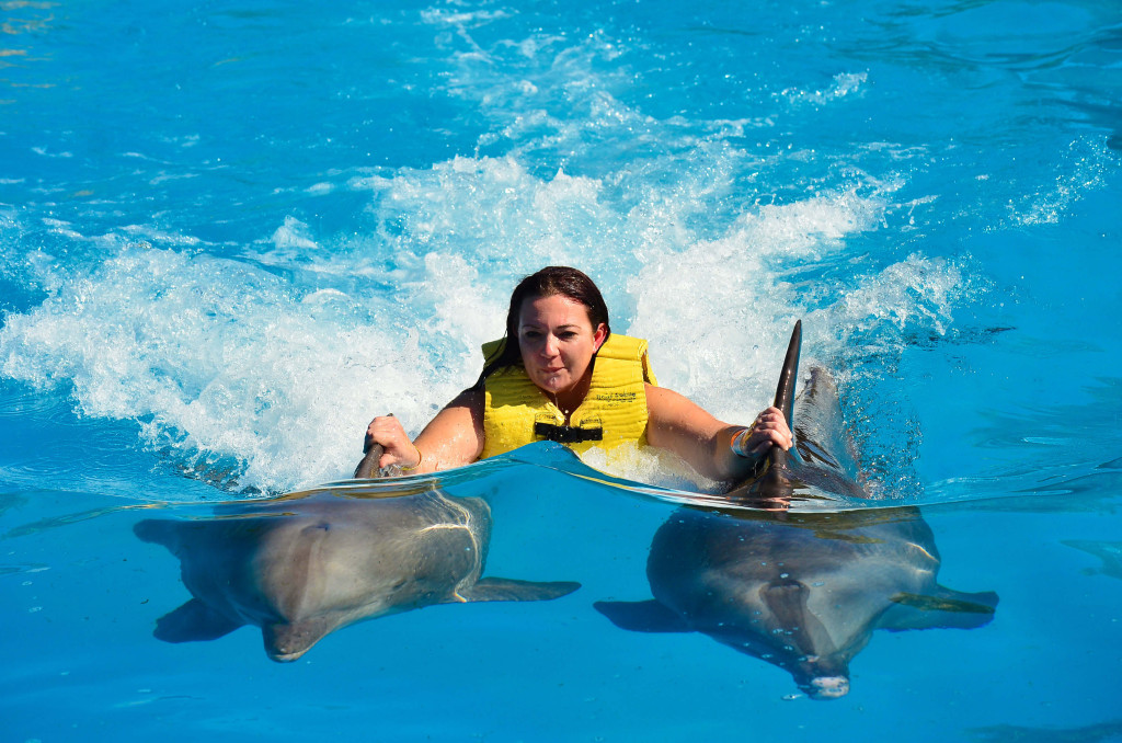 "alt=""swimming with dolphins"""