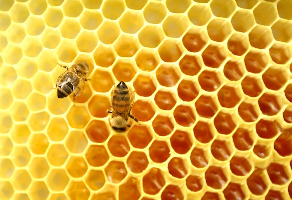 """alt=""""Bees in Hive"""""""