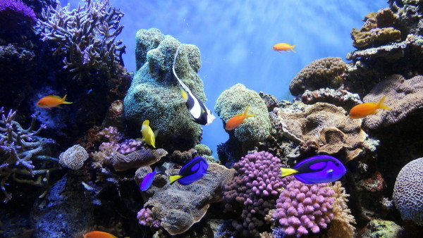 coral reefs depend on fish for nutrients