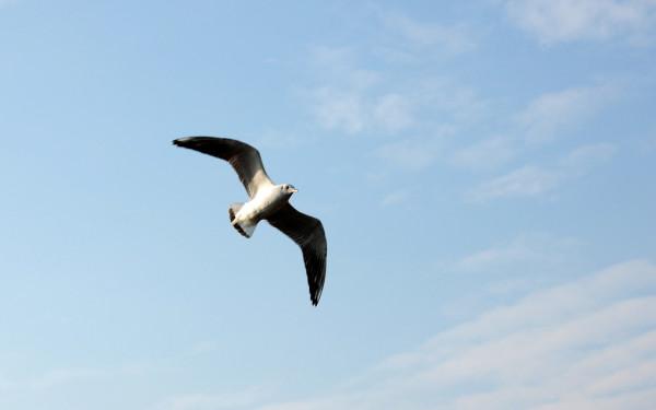 birds sleep while flying