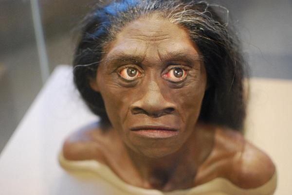 hobbit human head model