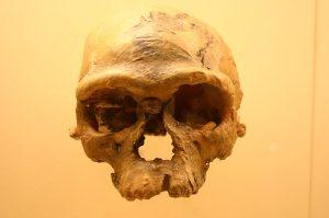earliest homo sapiens skull