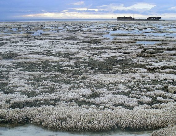 Massive Bleaching Event Seems To Be Coming To An End