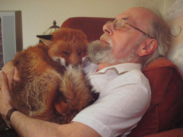 man sleep better with fox