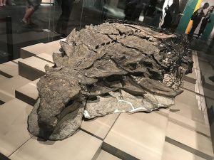 The Nodosaur Might Have Used Camouflage To Protect Itself