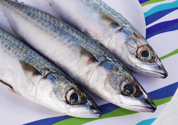 Three mackerels on a plate