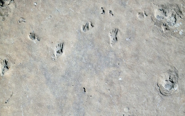 Fossil footprints in the Grand Canyon