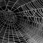 Spider Silk Might Be Used in Creating a Highly Sensitive Microphone (Study)