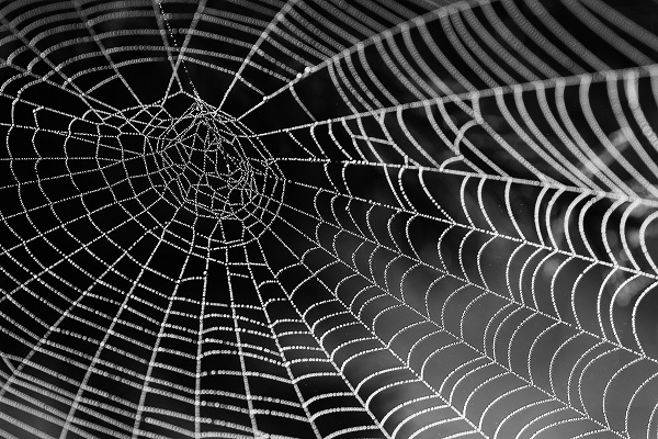 Web made of thin spider silk