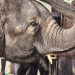 Elephants Communicate with Their Feet, Scientists Confirm